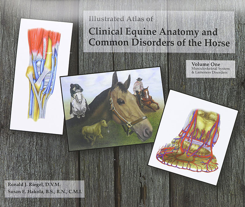 Book Cover - Illustrated Atlas of Clinical Equine Anatomy and Common Disorders of the Horse - Volume 1